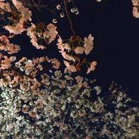 写真 2016-04-05 18 51 41